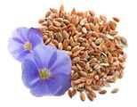 Семена льна купить оптом и в розницу ООО Флагман