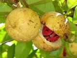 Мускатный орех плод ООО Флагман